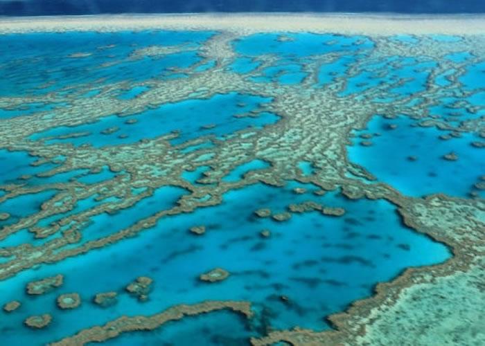 大堡礁大量模珊瑚白化。