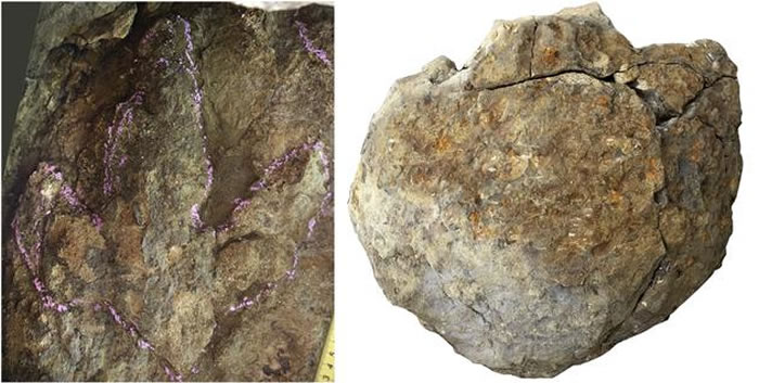 中外古生物学者宣布在吉林省延边朝鲜自治州发现恐龙足迹群