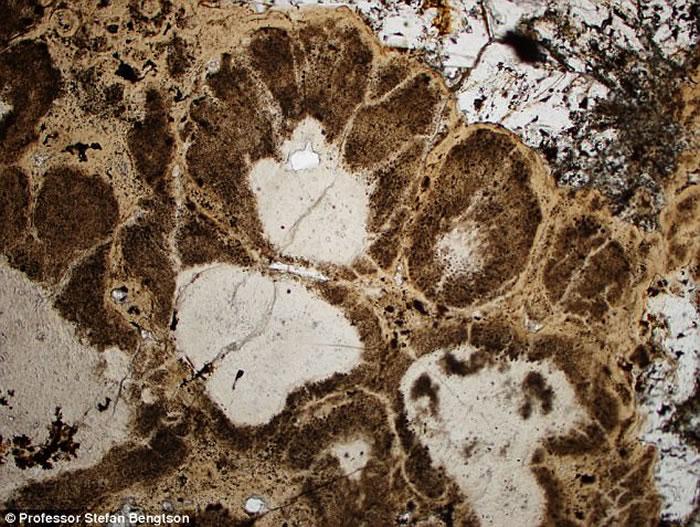 瑞典科学家在印度岩石中发现世界上迄今最古老的植物化石 距今16亿年