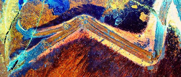 透过雷射照亮侏罗纪时代的化石,研究人员可对过去描绘的有羽恐龙──近鸟龙(Anchiornis)样貌增添更多细节。 PHOTOGRAPH BY WANG XL,