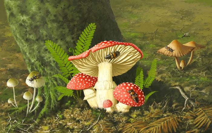 白垩纪中期巨须隐翅虫取食蘑菇的生态复原图。