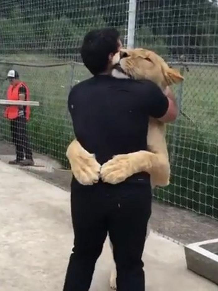 墨西哥收容所母狮子Kiara三岁生日热情拥抱小时候照顾它的人