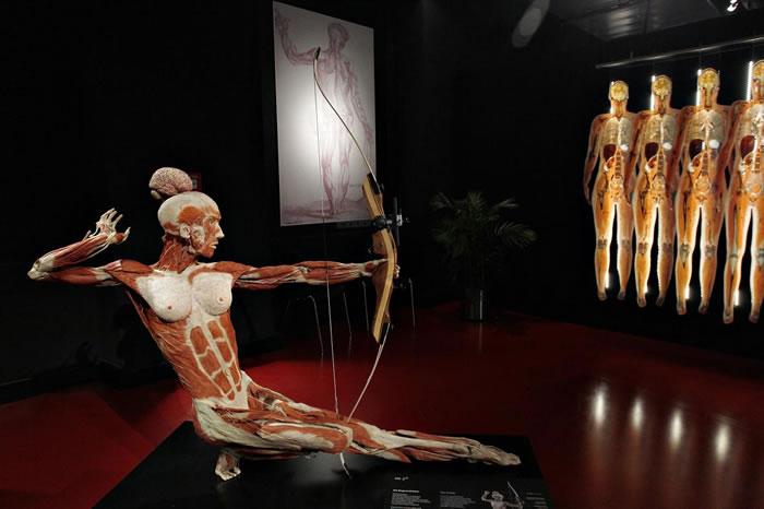 德国的解剖学家哈根斯的塑化生物机构把塑化技术保存的人体用各种姿势展示(如本图射箭姿势),表现出人体的精妙细微之处。 PHOTOGRAPH BY MICHELE