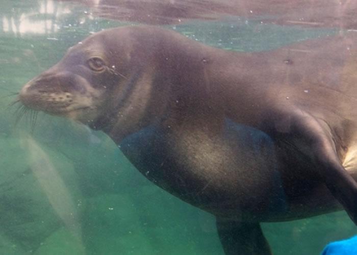僧海豹被困在养鱼场的网栏死亡。