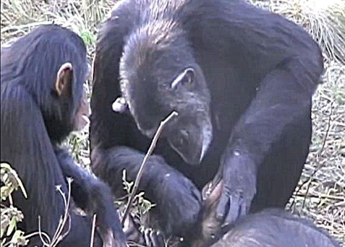 诺埃尔为养子洗牙。