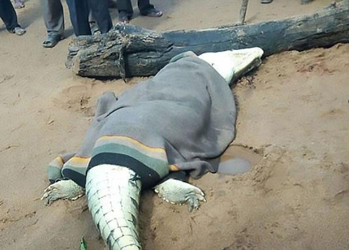 津巴布韦鳄鱼杀害并吞食8岁小孩 胃部寻获遗骸
