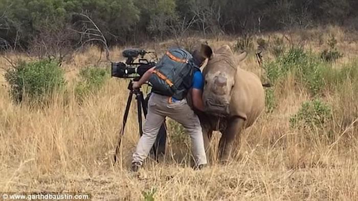 摄影师在南非草原拍摄时突然有只野生犀牛靠近