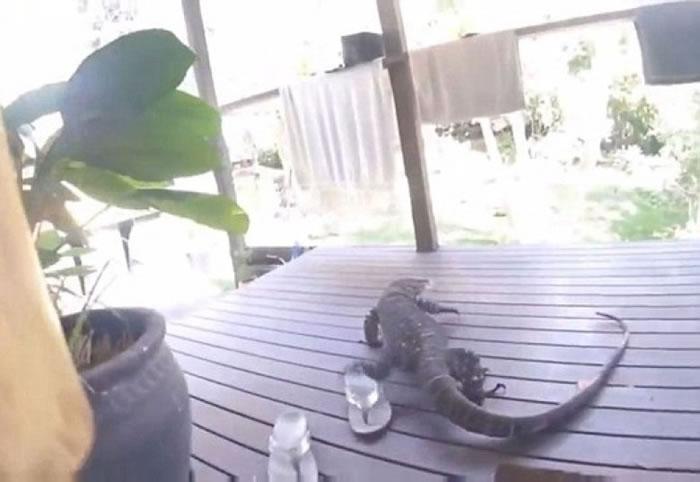 蜥蜴流连在门外。