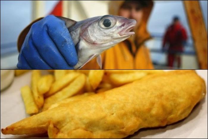 黑线鳕鱼(上)数量大跌,以后没有炸鱼薯条吃?