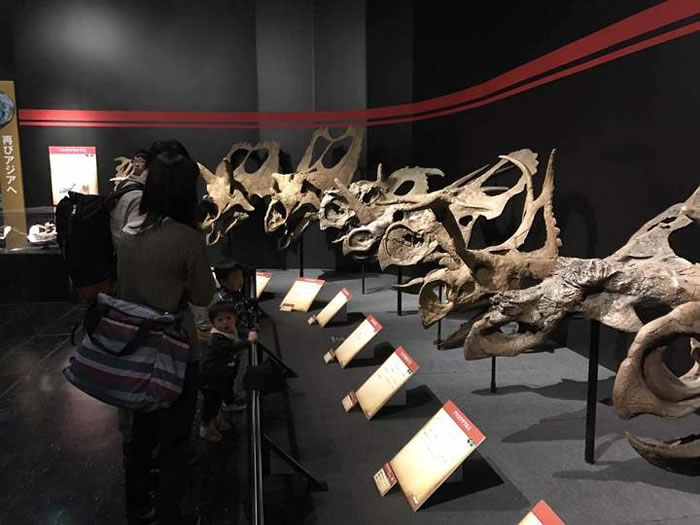 展览现场,浙江自然博物馆副馆长金幸生提供