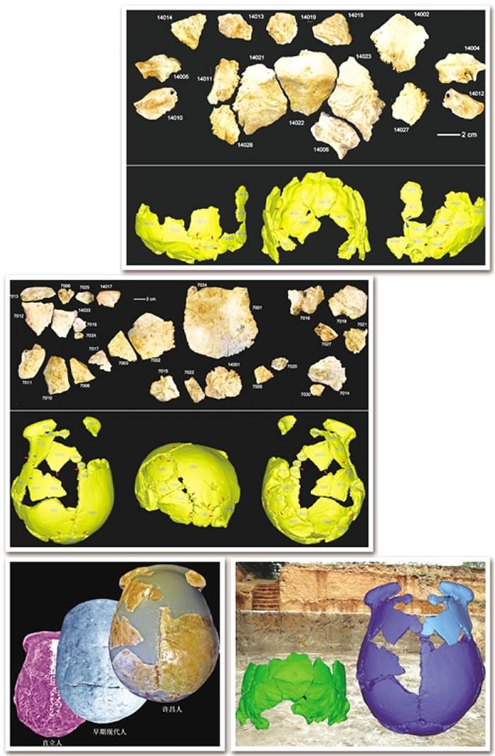 """图① """"许昌人""""2号头骨化石碎片及头骨化石的3D虚拟复原。图② """"许昌人""""1号头骨化石碎片及头骨化石的3D虚拟复原。图③ """"许昌人""""头骨顶面观及其与直立人、早期"""