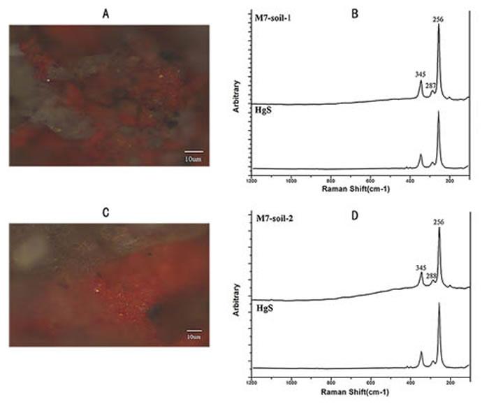 图2 拉曼光谱分析红色颜料(a,c)和拉曼光谱分析结果显示红色颜料是朱砂(b, d)(吴妍供图)