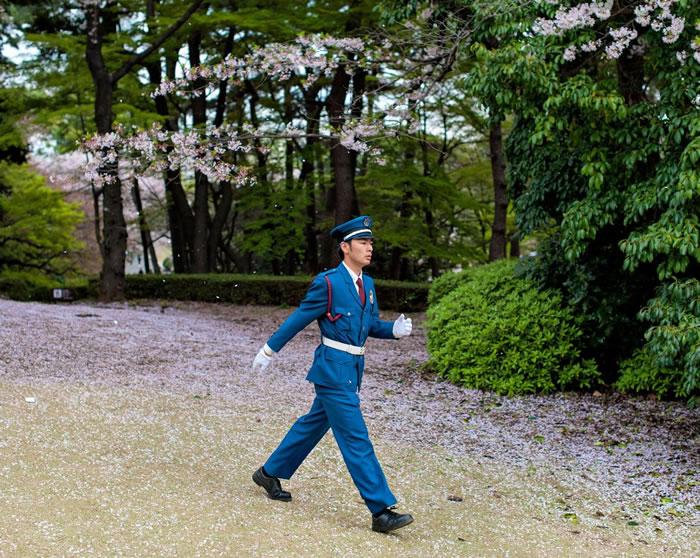 一位新宿御苑的警卫正在巡逻。新宿御苑内禁止吸烟喝酒,警卫负责确保民众遵守规定。 Photograph by Albert Bonsfills