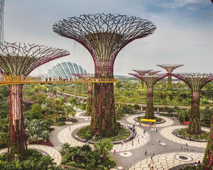 这些「超级树」是新加坡的象征,位于101公顷的滨海湾花园,高达20至50公尺,白天搜集太阳能供夜晚点亮灯光秀,树干则是垂直花园,布满超过15万株植物。 PHOT