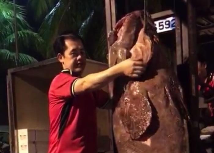 该龙趸从印尼近海捕获。