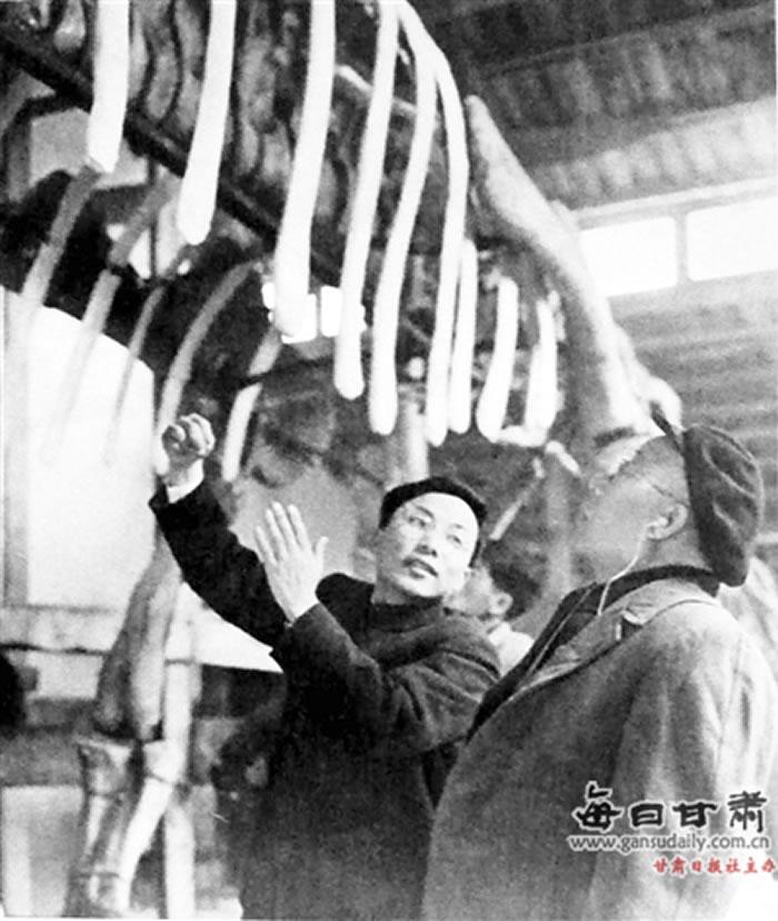 马门溪龙装架复原时杨钟健在现场指导