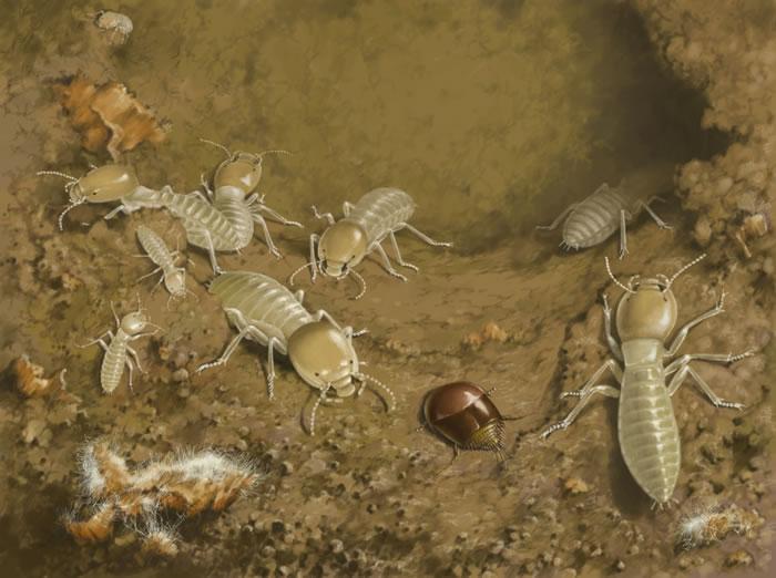 白垩纪螱客的生态复原图
