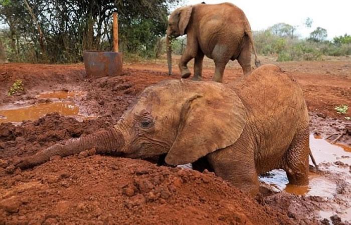 康复后的恩克莎于泥浆中玩得不亦乐乎。