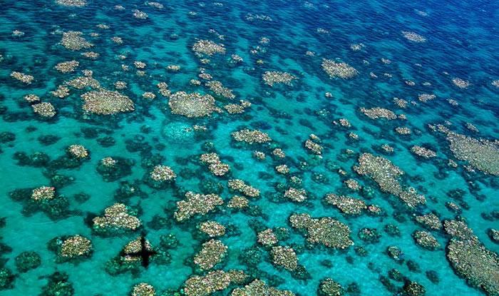 专家指大堡礁中段到北段的珊瑚已差不多全白化。