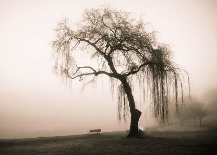 报告指树木品种深陷绝种是人类造成。(资料图片)