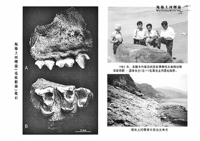 发现渑池上河曙猿(克氏假猿)化石