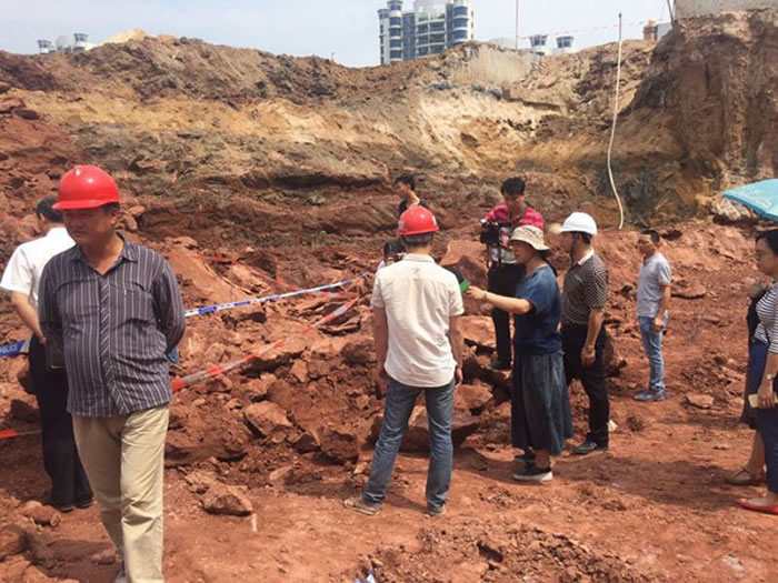 广东省佛山市南海区大沥镇北村水闸附近工地发现7000万年前恐龙蛋化石