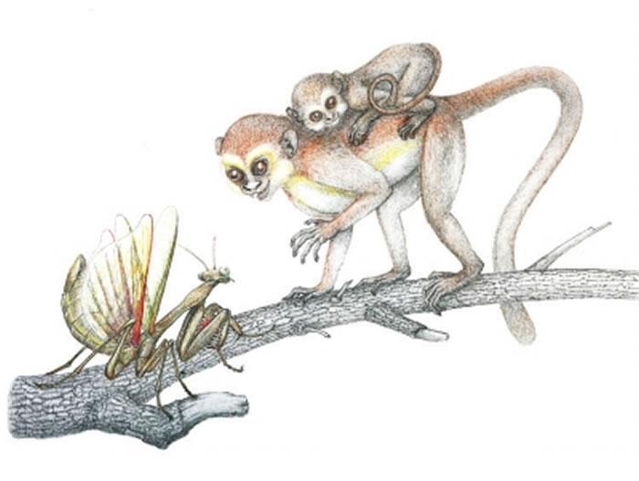 中国科学家公布曙猿复原图 渑池上河曙猿遗址获立碑保护