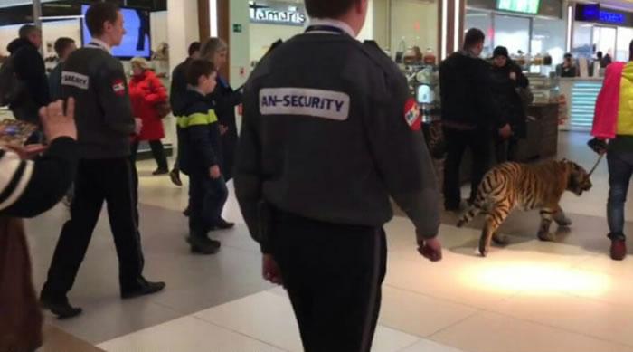 战斗民族:俄罗斯男子在商场遛老虎游