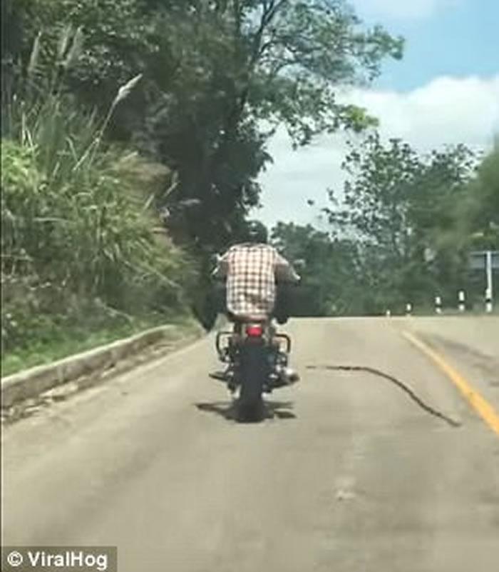 泰国摩托车山路行驶期间遇长蛇突袭 司机轻轻抬腿避开攻击