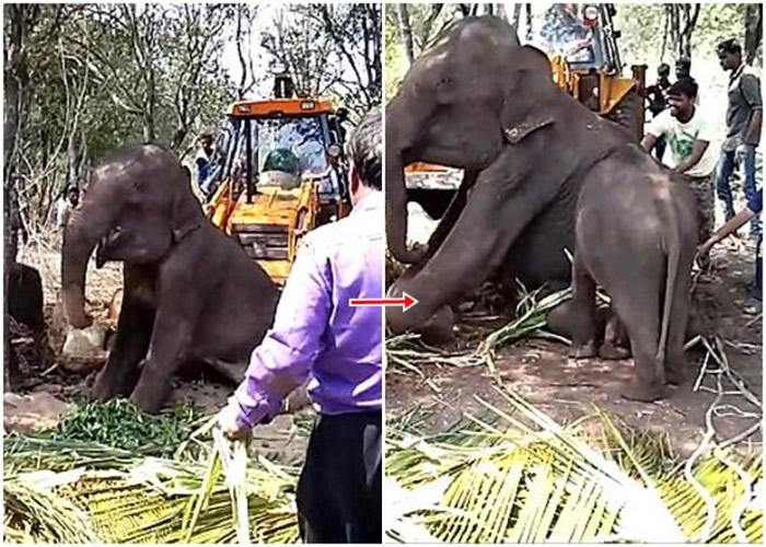 小象未有离开,反而不断试图推起母亲。 <br>