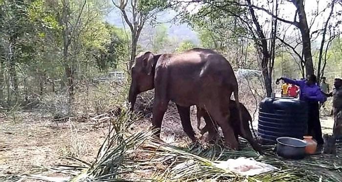 大象站起来后,现场传出一片欢呼。 <br>