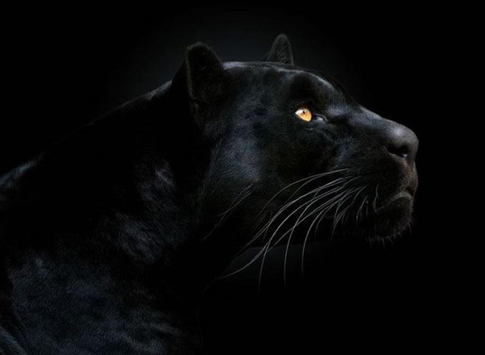 雅拉山脉一直以来都有大黑猫出没的传说。