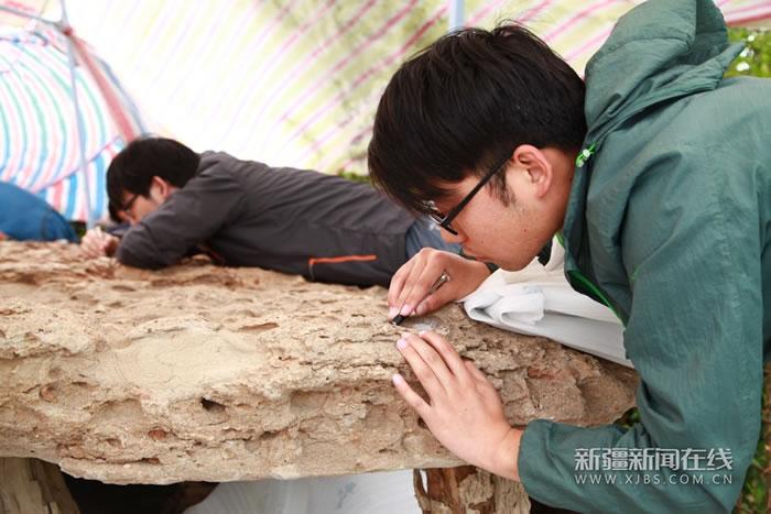 """世界已知最大翼龙化石标本""""翼之巢""""将在"""