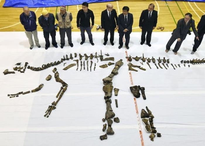日本恐龙研究史上最大发现:北海道鸭嘴龙日本漫画祥云社