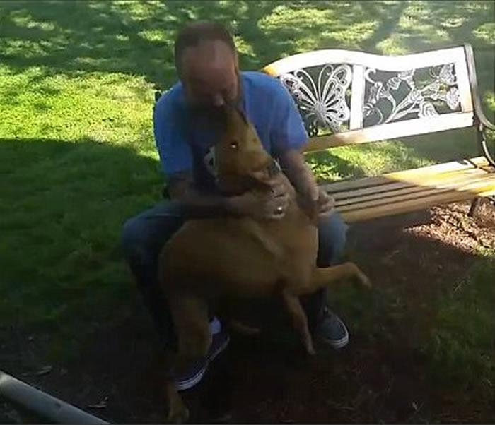 以为大病暴瘦主人是入侵者 美国狗狗凭气味相认