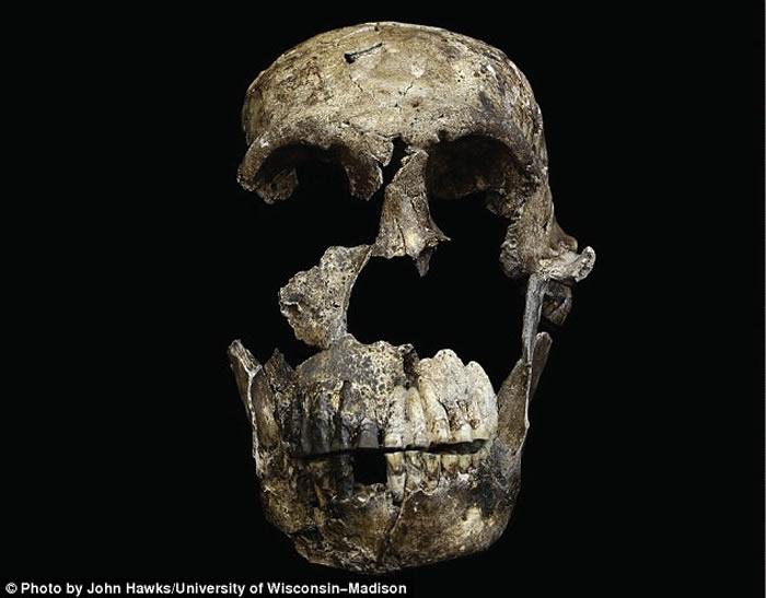 可能是21日本奥特曼邪恶漫画大全图片大全图片大全图片大全世纪发现的最棒化石:全新古人类