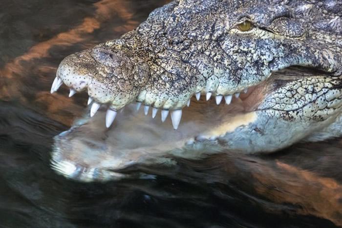 """津巴布韦牧师试图模仿《圣经》中耶稣在水上行走 在""""鳄鱼河""""被3只鳄鱼生吞"""