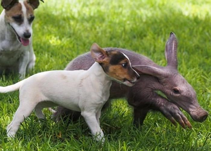 格蒂与狗狗相处融洽。