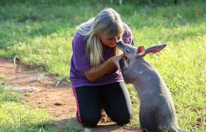 收养格蒂的德亚赫为一名兽医。