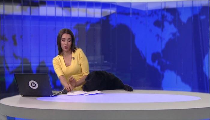 俄罗斯新闻播到一半 黑狗从下方探头趴上桌