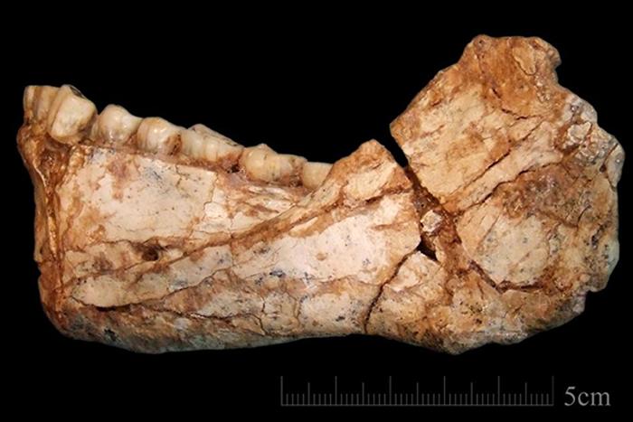 该成年智人的下颚骨化石出土于摩洛哥的Jebel Irhoud地区,保存完好的牙齿让人不禁想到今天的人类。摄影:JEAN-JACQUES HUBLIN, MPI-