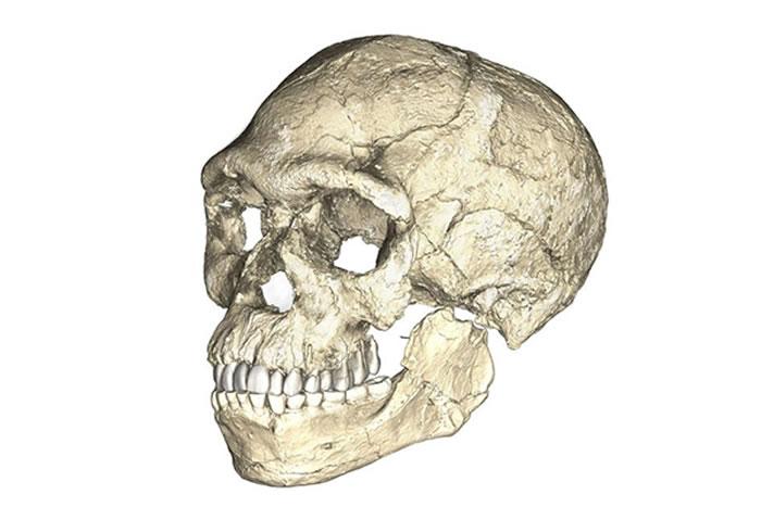 研究人员对Jebel Irhoud地区出土的众多化石进行三维扫描,并重建了某位智人的头骨。摄影:PHILIPP GUNZ, MPI EVA LEIPZIG