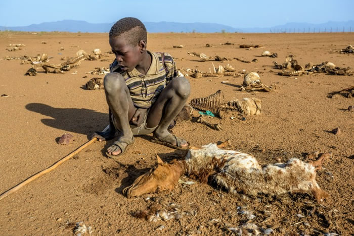 东非的粮荒情况持续严峻。