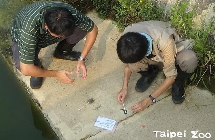 透过野外调查,了解金门水獭的分布现况及特性。