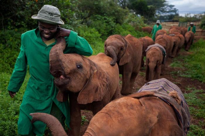 2010年,在肯亚奈洛比国家公园(Nairobi National Park)中大卫.谢德里克野生动物信托中心(David Sheldrick Wildlife