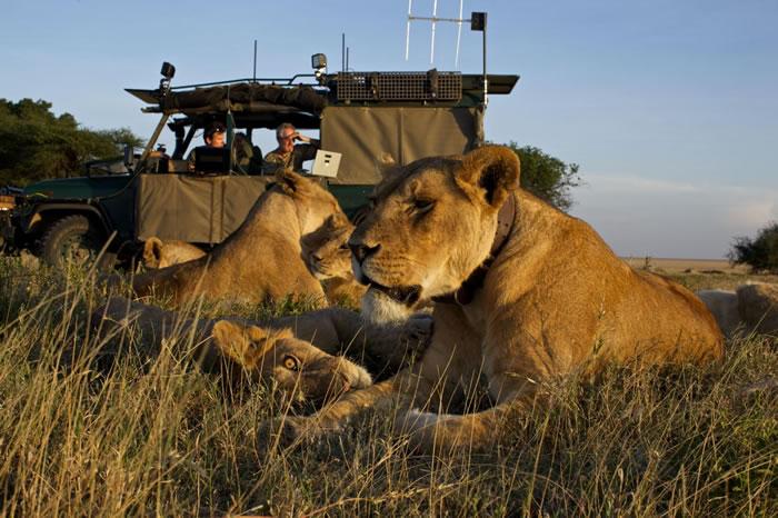 2012年,在塞伦盖提国家公园(Serengeti National Park)利用自动照相机拍摄的照片中,尼可斯与妻子瑞芭(Reba)和助理内森.威廉姆森(N