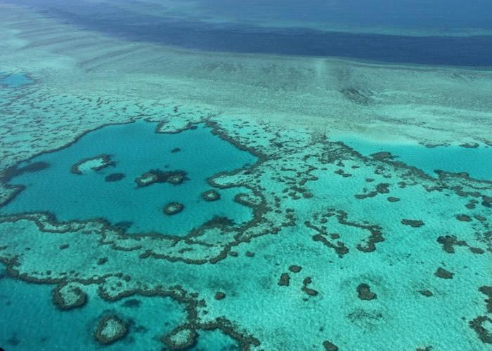 大量珊瑚因海洋升温而白化死亡。