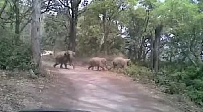 旅客遇上数只过路大象。