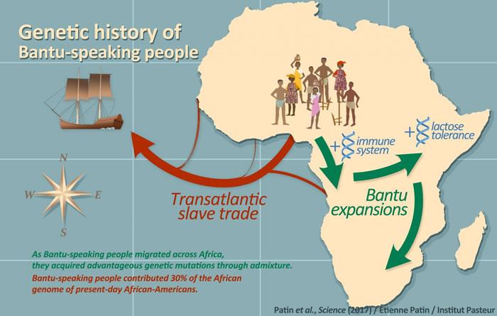 随着说班图语者在整个非洲的迁徙,他们通过人种混合获得了有利的基因变异。