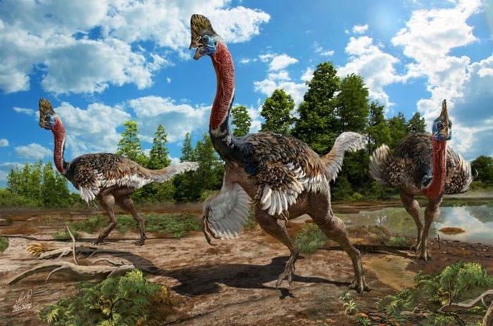 中国自媒体猎奇是什么科学家发现恐龙会孵蛋的新证据